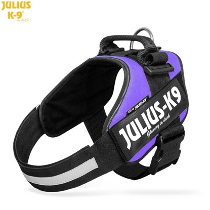 Julius-K9 IDC Powerharness Purple Size: 1