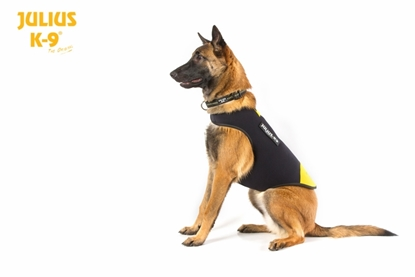 Julius-K9 IDC Neoprene Dog Jacket